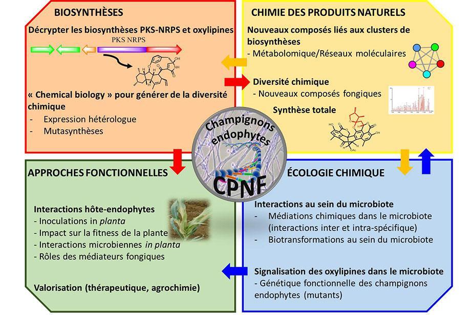 Champignons endophytes - CPNF © Soizic Prado