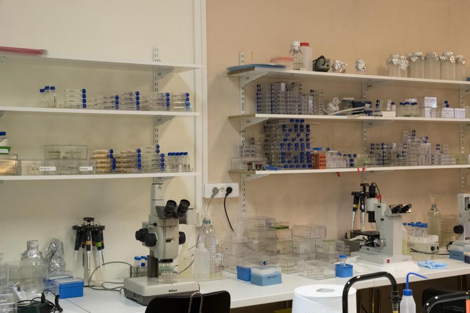 Salle de collection des protistes libres
