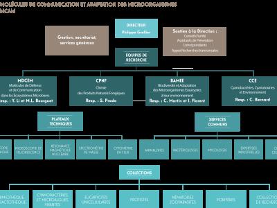 Organigramme de l'unité MCAM