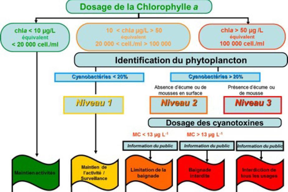 Schéma décisionnel permettant d'évaluer le risque toxique lié aux efflorescences de cyanobactéries © Cécile Bernard