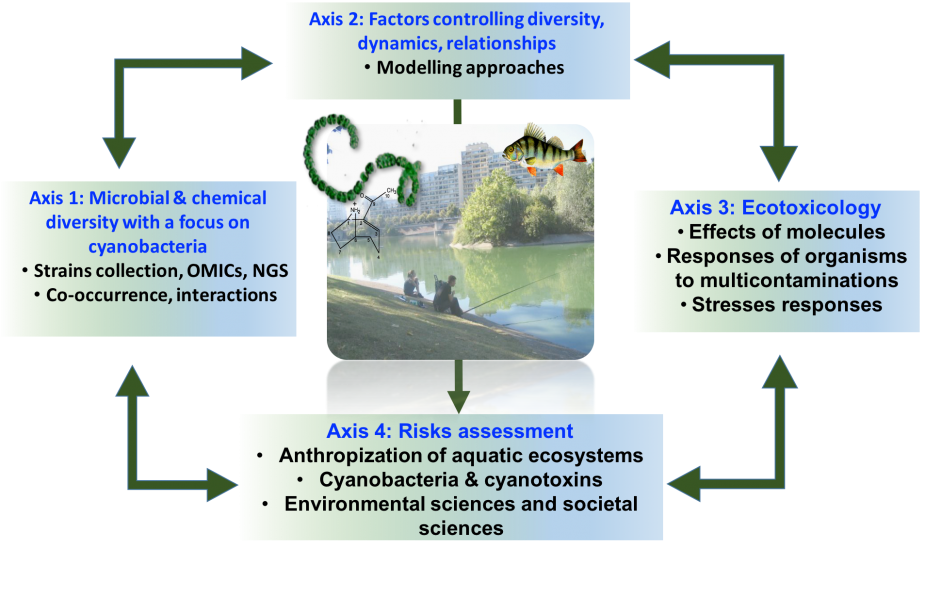 Schematic representation of the major CCE research topics (Biodiversity, ecotoxicology, and transfer of knowledge to environmental and societal sciences. The picture represents the close relationship between aquatic ecosystem (i.e. urban lake) and human pressures (i.e. fishing, urbanization). The ecological status of aquatic ecosystems has consequences on ecosystems biodiversity, ecosystem functioning and good & services of these environments (© C. Bernard, MNHN).